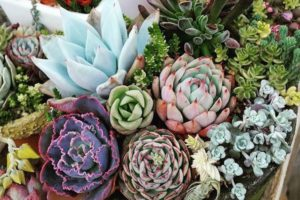 Cactus & Succulent Show 2017