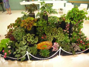 Queensland Begonia Society Annual Show